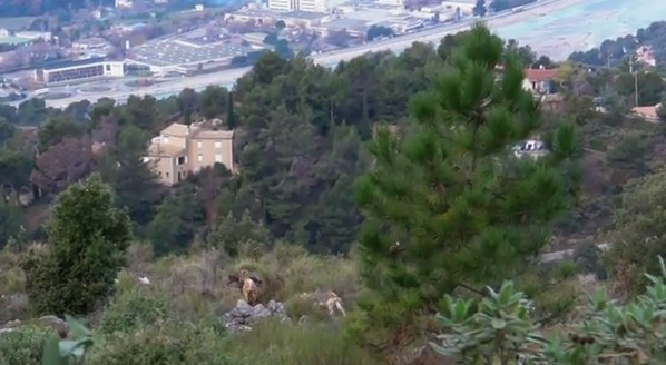 Nice, mountain goats, river Var