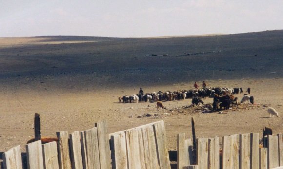 Goats in the Gobi desert, from book Herder's Boots