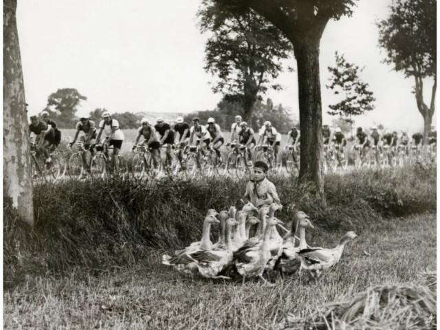 a boy with ducks along le Tour de France