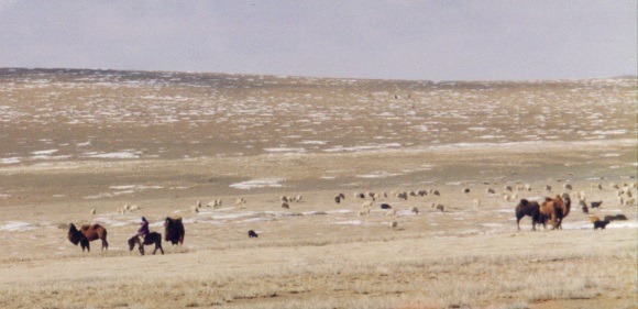 Camel herder, ebook on Mongolia travel