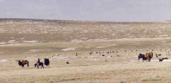 Camel herder, ebook on Mongolia travel