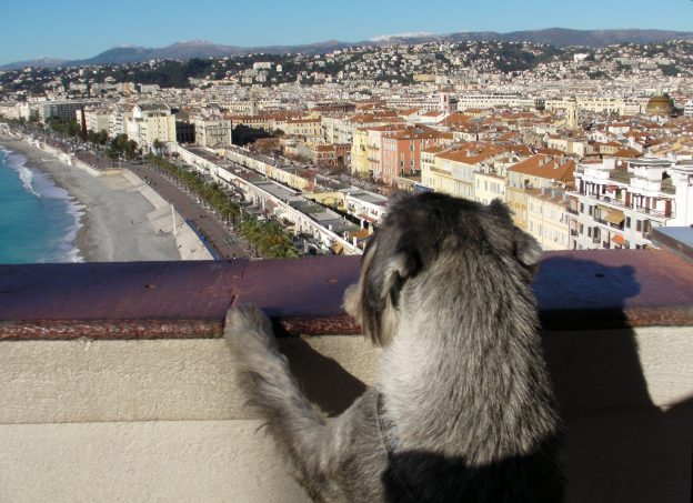 a traveling dog admires the view in Nice, France