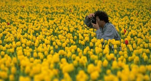 photographer taking a photo in flower field