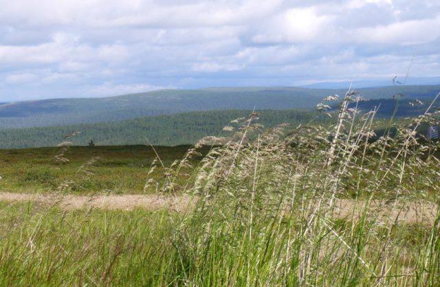 fell scenery in Saariselkä, Lapland (from Klaava travel guidebook)