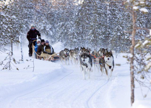 Husky dog sledge tour in Lapland