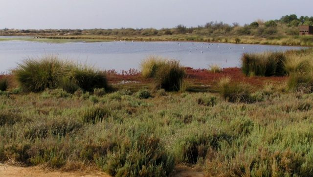 Ria Formosa nature reserve in Algarve, Portugal